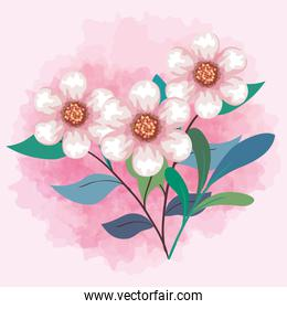 cute flowers color pink with leaves and branches