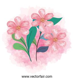 cute flowers color pink with branches and leaves, decoration natural