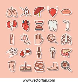 human body anatomy organs health lungs liver tooth heart foot bone mouth icons collection line and fill