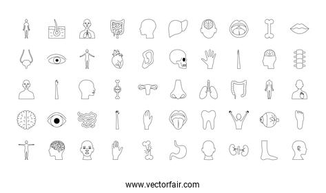 human body organs and parts icon set, line style