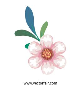 pink flower drawing with leaves vector design