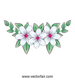 white flowers with leaves vector design