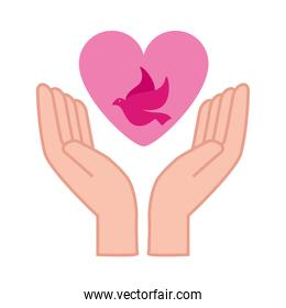 dove in heart between hands vector design