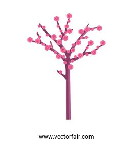 Isolated chinese flowers tree vector design
