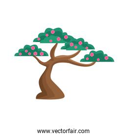 Isolated chinese tree with flowers vector design