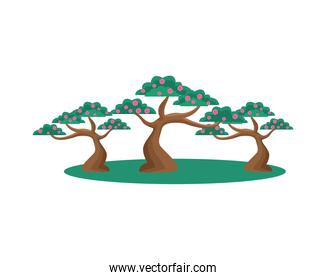 Isolated chinese trees with flowers vector design