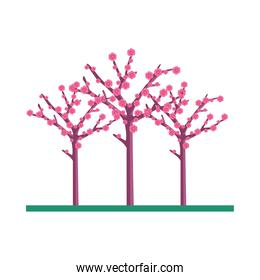 Isolated chinese flowers trees vector design