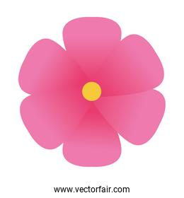 Isolated pink flower design