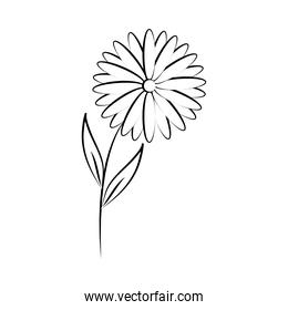 minimalist tattoo flower daisy nature line art herb and leaves