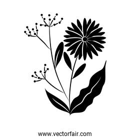 minimalist tattoo flower fruits botancial silhouette art herb and leaves