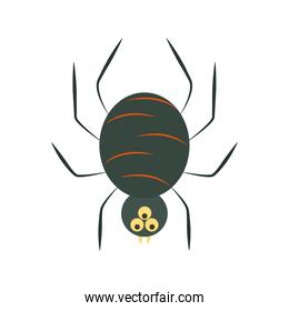 creepy black spider cartoon flat icon style