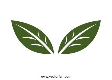 design leaf for corporate company