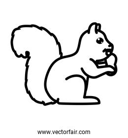 squirrel with a nut icon, line style