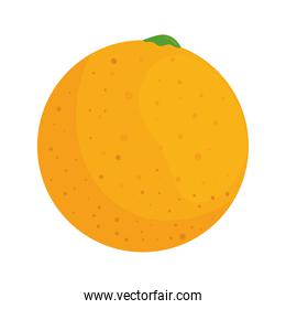 orange fresh and healthy fruit, in white background