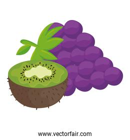 fresh fruits, grapes and kiwi, in white background