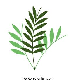 green branches leaves foliage botanical isolated icon