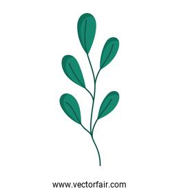 green branch leaves foliage isolated icon white background