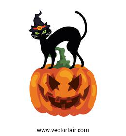 halloween pumpkin and cat with hat witch on white background