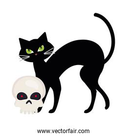 halloween, cute black cat and skull in white background