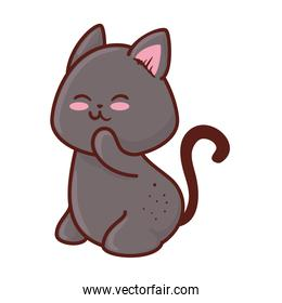 cute cat animal in white background