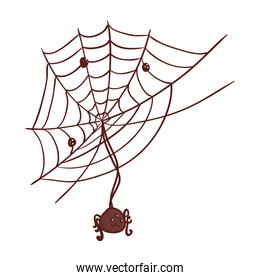 halloween, cute spider hanging of cobweb in white background