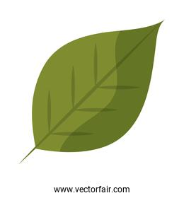 leaf foliage nature plant flat icon with shadow