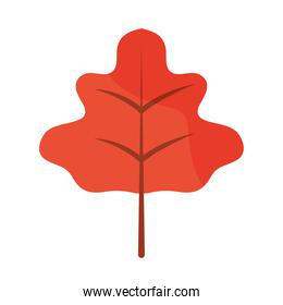 autumn leaf foliage natural flat icon with shadow