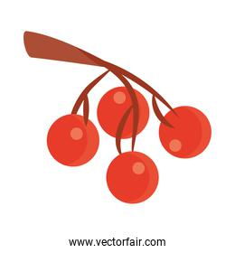 fruits cherries in the branch tree flat icon with shadow