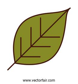 leaf foliage nature plant line and fill icon