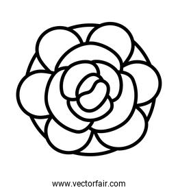 beautiful rose icon, line style