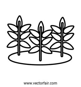 autumn trees branches and leafs cultivating scene line style icon