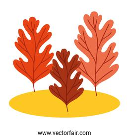 autumn trees cultivating plants ecology scene