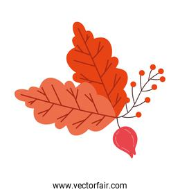 autumn season leafs and seeds botanical decoration