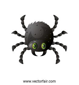 funny spider for halloween on white background