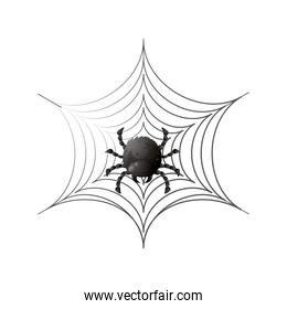 spider on cobweb for halloween on white background