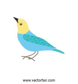 blue and yellow bird icon, flat style