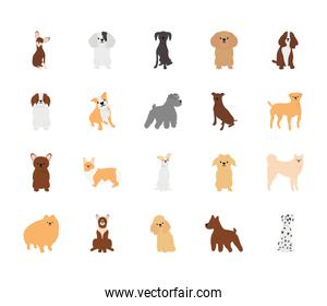 icon set of cartoon dogs and poodle, flat style