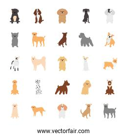 cartoon poodle and dogs icon set, flat style