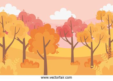 leaves forest autumn panorama nature trees sky scene