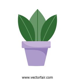 plant in pot garden decoration isolated design white background