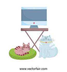 workspace monitor computer on table and cats isolated design white background