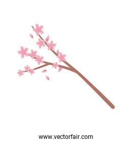 sakura flowers branch tree nature isolated icon style