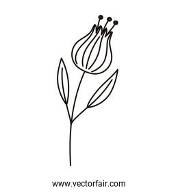 flower tulip petals leaves decoration isolated icon line style