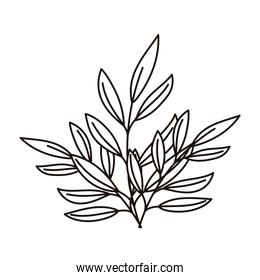 branches foliage leaves decoration nature isolated icon line style