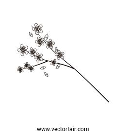 sakura flowers branch tree nature isolated icon line style