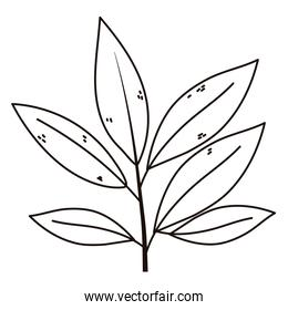 branch leaves foliage natural isolated icon line style