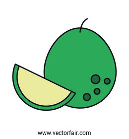 pomelo fruit icon, line and fill style