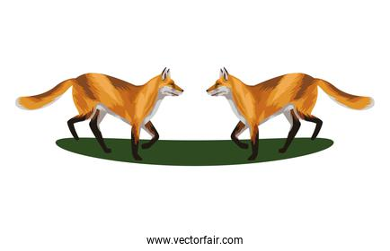 wild foxes animals nature icons