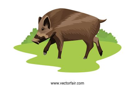wild pig animal nature icon