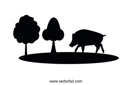 wild pig animal nature silhouette in camp